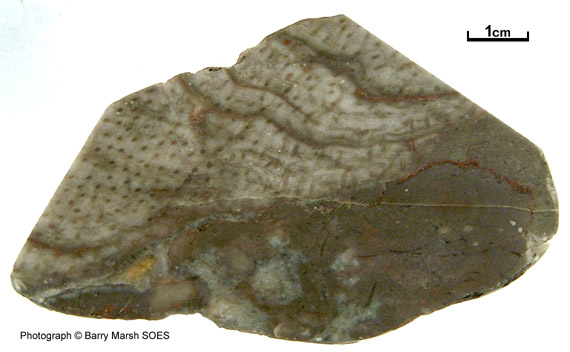 name assigned to collection of fossils